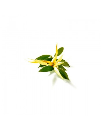 Ylang Ylang - Essential Oil...