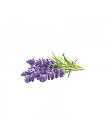 Lavender - Essential Oil...