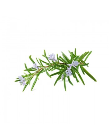 Rosemary - Essential Oil...